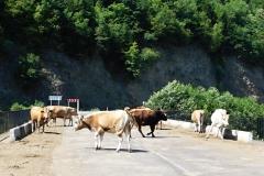 14 Gruzínska diaľnica